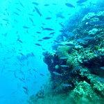 Poseidon Outer Reef Cruises