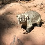 Bearizona Wildlife Park의 사진