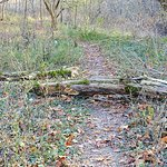 bird sanctuary trail
