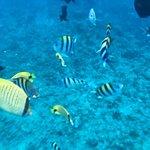 Ko Olina Ocean Adventures resmi