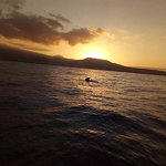 Zdjęcie Mola Mola Tenerife Sailing