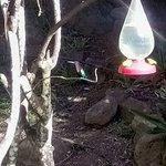 Photo de Au jardin des colibris