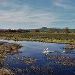Bilde fra WWT Caerlaverock Wetland Centre