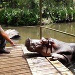 Photo of Hippo Jessica