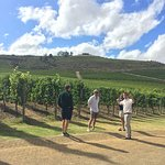 Wine Escapes - Exclusive Cellar & Vineyard Tours照片