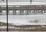 View of waterway & egrets