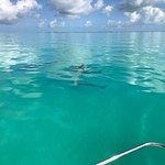 Dolphin Watch Foto