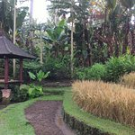 Romantic and healing scenery in the village of ubud at Villa Semana