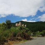 Coromandel Forest Park / Coromandel Peninsula