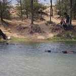 A great place to see the Buffalos come and swim in the waters, often in mornings and afternoons.