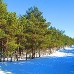 Photo of Curonian Spit