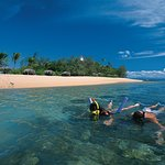 Low Isles Snorkelling from the beach over coral gardens with Sailaway