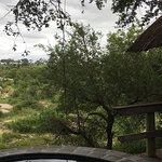 Photo of Londolozi Private Game Reserve