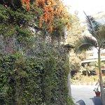 I hotellets trädgård.