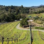 Photo of Benziger Family Winery