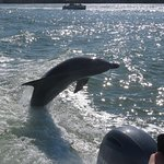 Dolphin surfing in the wake of our boat.