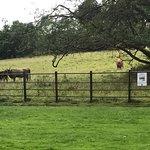 Foto van Pollok Country Park