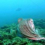 Photo de LJ Diving Tenerife