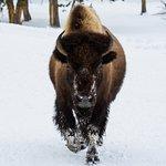 BrushBuck Wildlife Tours Foto