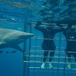 Shark Cage Diving KZNの写真