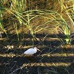 Bild från Lakes Regional Park