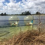 Kids playing inside the water balls.