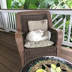 Romeo's favorite chair