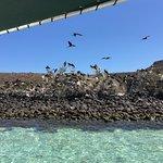Isla Espiritu Santo Foto