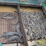 Foto de Siem Reap Crocodile Farm