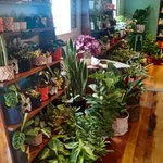 Café, bar, plantas