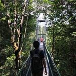 Photo de MacRitchie Nature Trail