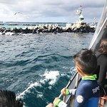 Foto di Sea All Dolphin Swims