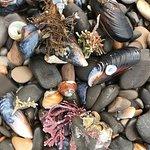 beach flora & fauna