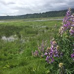 Photo de Nisqually National Wildlife Refuge