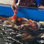 小柚木船运河冒险之旅照片
