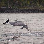 Spinner dolphin spinning