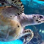 Photo de Mauritius Aquarium