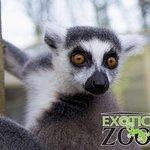 Exotic Zoo