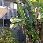 Photo of Dinah's Garden Hotel
