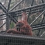 Hong Kong Zoological and Botanical Gardens Resmi