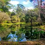Photo de Alfred B. Maclay Gardens State Park