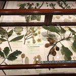 Photo of Harvard Museum of Natural History
