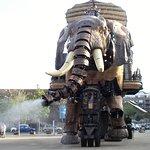 vous voyagez sur l'éléphant le temps d'une ballade