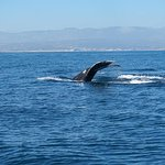 Whale tail with Cabo in background