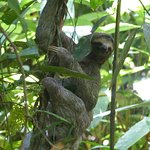 Three toad sloth descending for a bathroom break