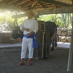 One of the guides with an ox