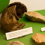 Swanscombe Skull replica