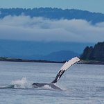 Our humpback playing and flapping its flippers