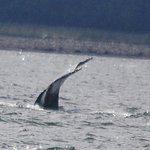 Whale's tail!