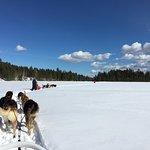 Dogs on Gander Lake